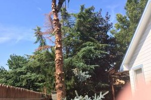 Photo #6: Professional Tree Service Boise