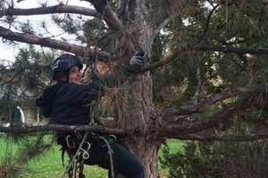 Photo #3: Professional Tree Service Boise