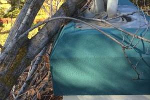 Photo #2: Professional Tree Service Boise
