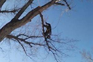 Photo #13: City of Treez Tree Service LLC