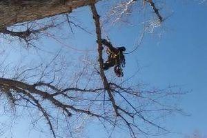 Photo #12: City of Treez Tree Service LLC