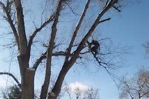 Photo #11: City of Treez Tree Service LLC
