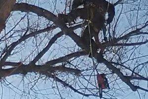 Photo #9: City of Treez Tree Service LLC
