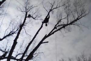 Photo #8: City of Treez Tree Service LLC