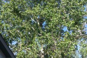 Photo #7: City of Treez Tree Service LLC
