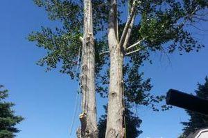 Photo #6: City of Treez Tree Service LLC