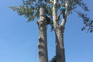 Photo #5: City of Treez Tree Service LLC