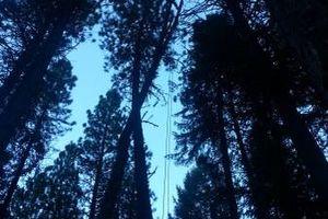 Photo #2: City of Treez Tree Service LLC