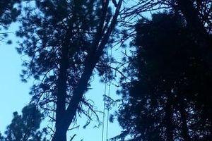 Photo #1: City of Treez Tree Service LLC