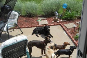 Photo #8: HOME SWEET HOME PET SITTING (Licensed)