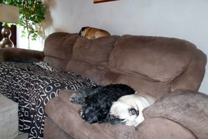 Photo #9: HOME SWEET HOME PET SITTING (Licensed)