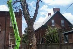 Photo #1: Rhew's Outdoor Services