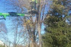 Photo #3: Rhew's Outdoor Services