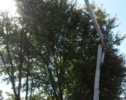 Photo #4: Action Tree Service & Stumps too