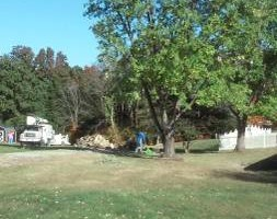 Photo #5: Action Tree Service & Stumps too