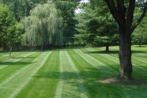 Photo #1: Lawn Care and Mowing - cut, weed, and blow