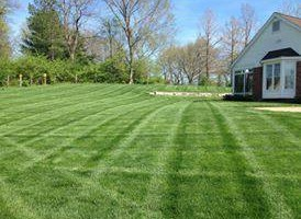Photo #2: CB Home Improvement. Spring Clean Up! Brush Clearing, Mulch, Staining, Sod Install
