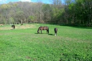 Photo #1: Horse Boarding - No Training Package Required - Wildwood Farm