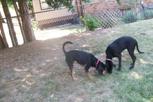 Photo #22: *LICENSED DOGGIE DAYCARE $14