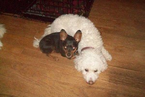 Photo #19: *LICENSED DOGGIE DAYCARE $14