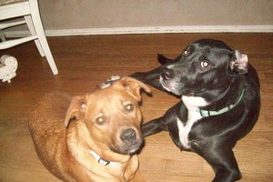 Photo #16: *LICENSED DOGGIE DAYCARE $14
