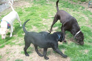Photo #9: *LICENSED DOGGIE DAYCARE $14