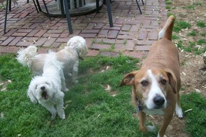 Photo #12: *LICENSED DOGGIE DAYCARE $14