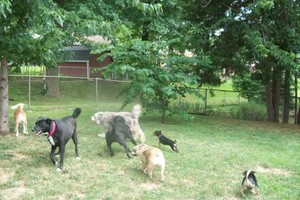 Photo #13: *LICENSED DOGGIE DAYCARE $14