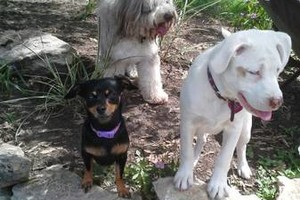 Photo #8: *LICENSED DOGGIE DAYCARE $14