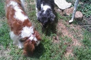 Photo #6: *LICENSED DOGGIE DAYCARE $14