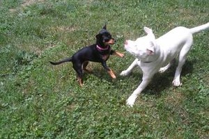 Photo #18: *LICENSED DOGGIE DAYCARE $14