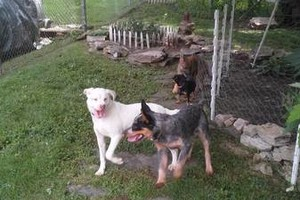 Photo #4: *LICENSED DOGGIE DAYCARE $14