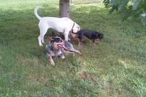 Photo #3: *LICENSED DOGGIE DAYCARE $14