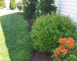 Photo #8: Shannas m+g lawn care and land scape