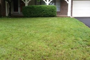 Photo #1: Camacho's lawn care & landscaping