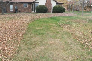 Photo #5: Michale's Lawn care