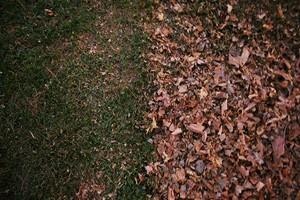 Photo #5: Michale's Lawn care