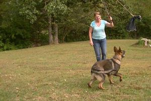 Photo #1: GERMAN LINE DOGS. All Breed Obedience Training