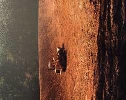 Photo #7: Excavating Service