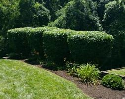 Photo #5: Professional Tony's Lawn & Landscaping! Affordable hardscapes and...