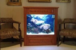 Photo #1: Aquarium service