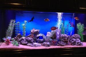 Photo #2: Aquarium service