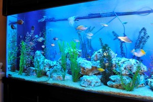 Photo #3: Aquarium service