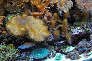 Photo #4: Aquarium service