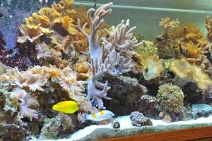 Photo #5: Aquarium service