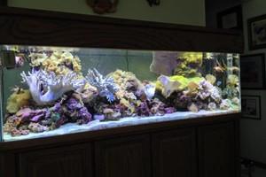 Photo #7: Aquarium service