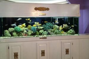 Photo #8: Aquarium service