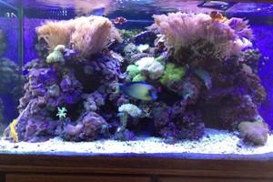 Photo #9: Aquarium service