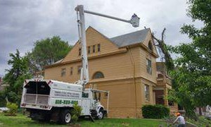 Photo #2: Noel's tree removal service licensed and insured free estimate