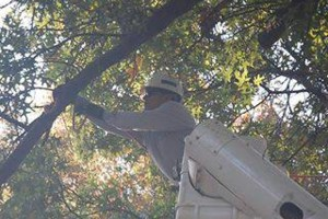 Photo #1: Noel's tree removal service licensed and insured free estimate